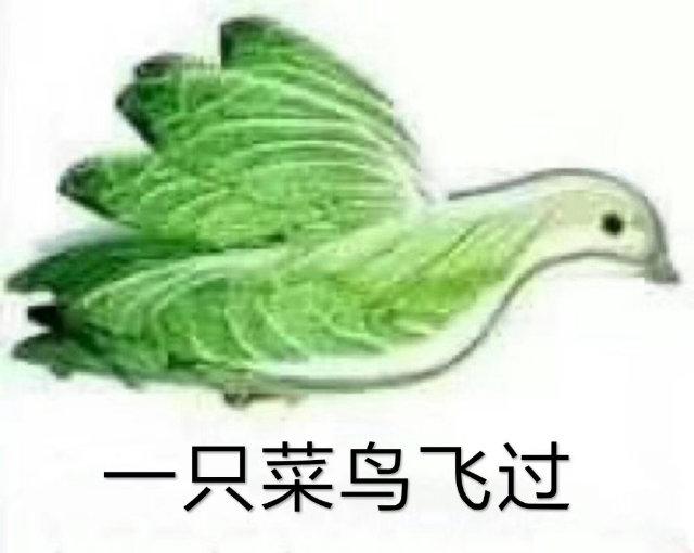 一只菜鸟飞过