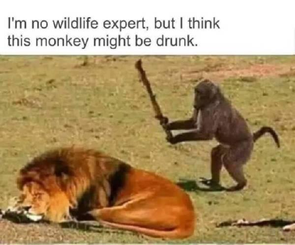 赢了猴王输了猴亡