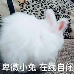 卑微小兔在线自闭