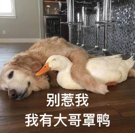 别惹我我有大哥罩鸭
