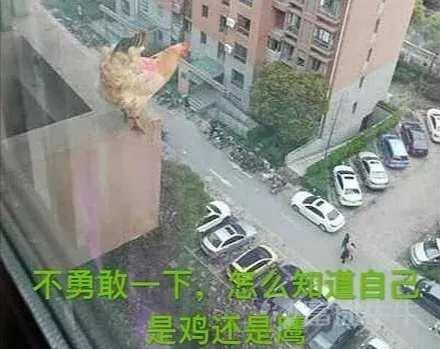不勇敢一下怎么知道自己是鸡还是鹰