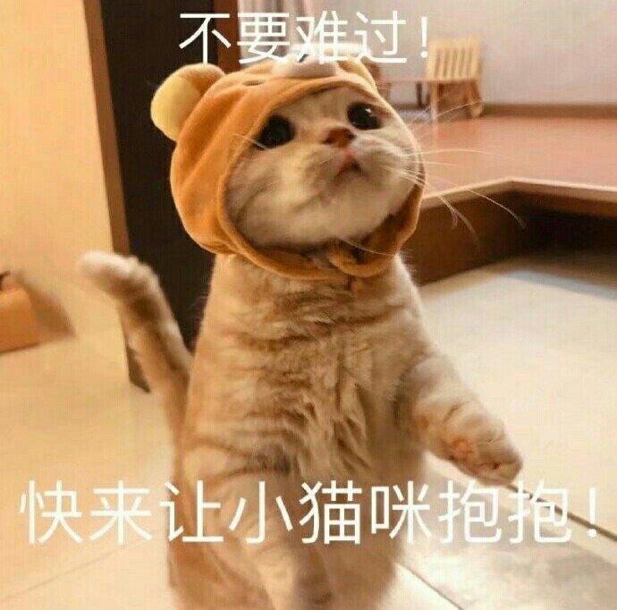 不要难过快来让小猫咪抱抱