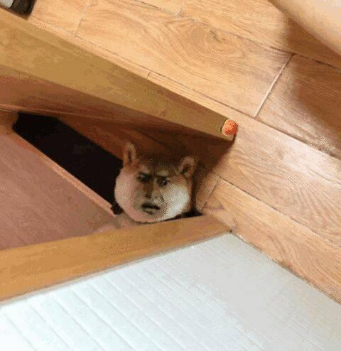 卧槽你发现我了
