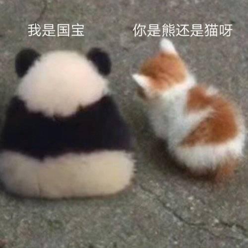 我是国宝你是熊还是猫呀