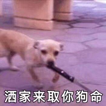 洒家来取你的狗命