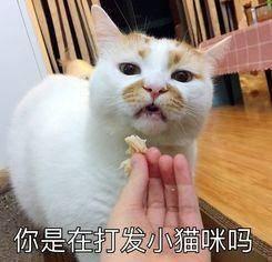 你是在打发小猫咪吗