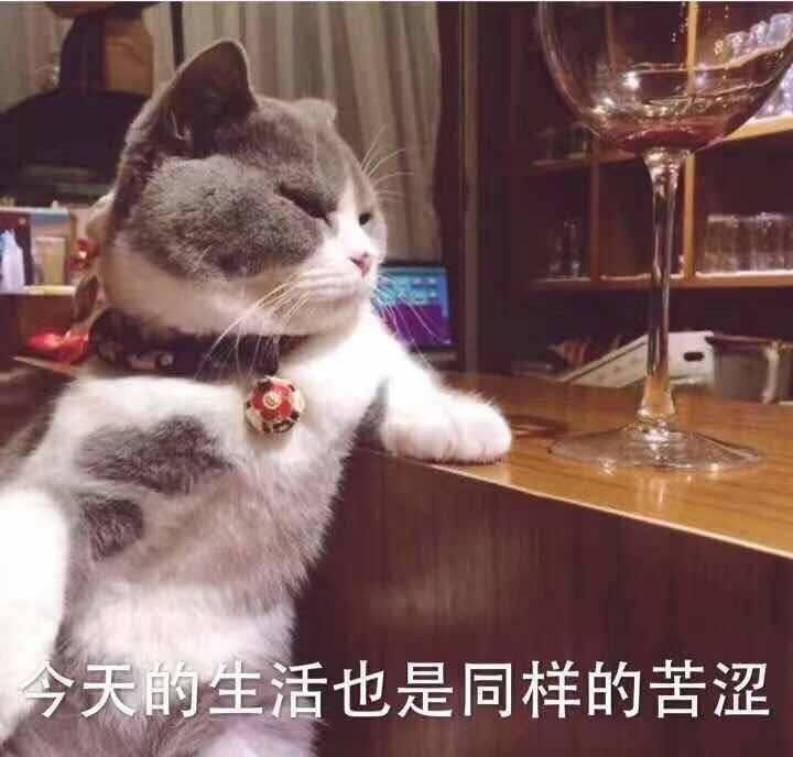 喝闷酒的猫星人